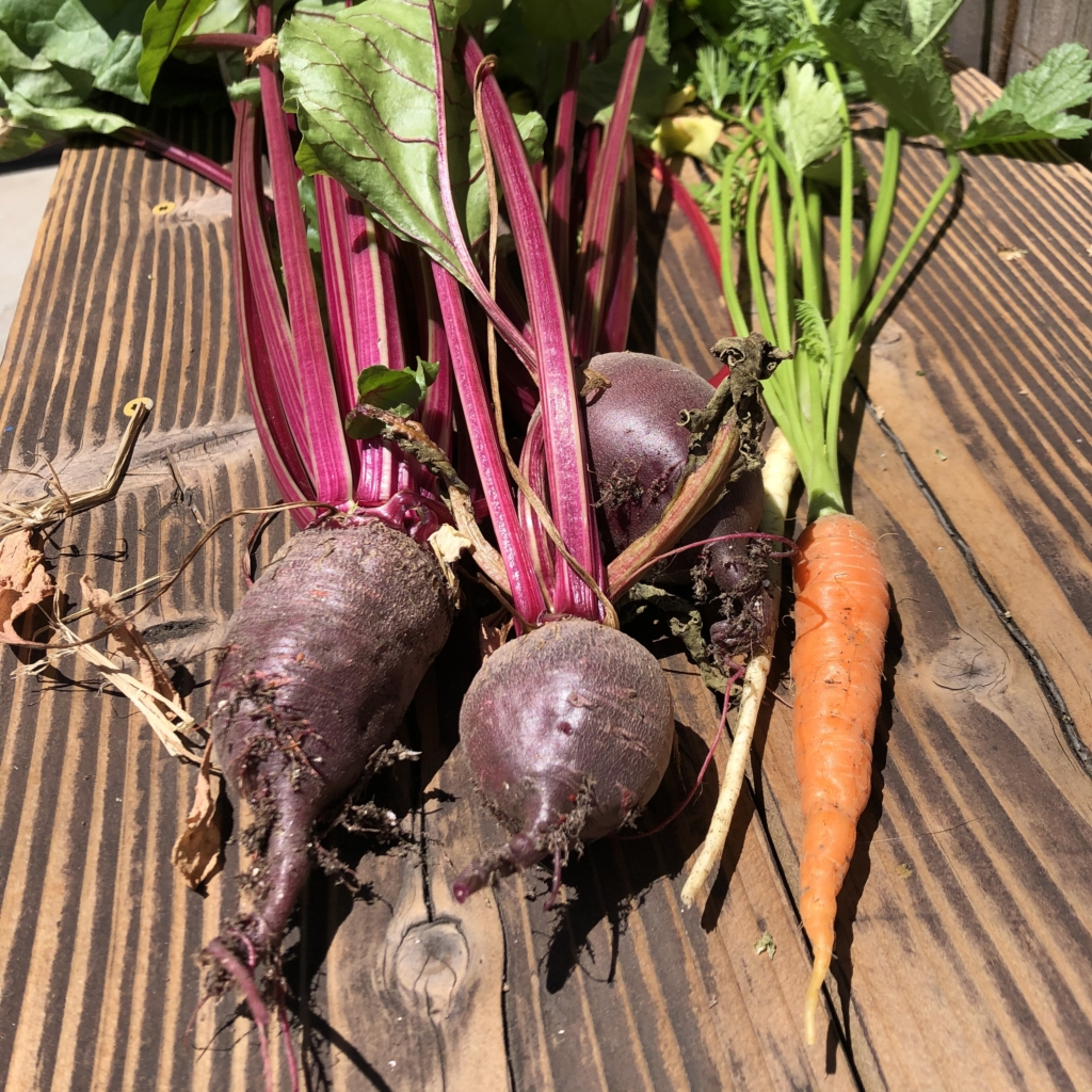 Nantes Carrots and some Beets