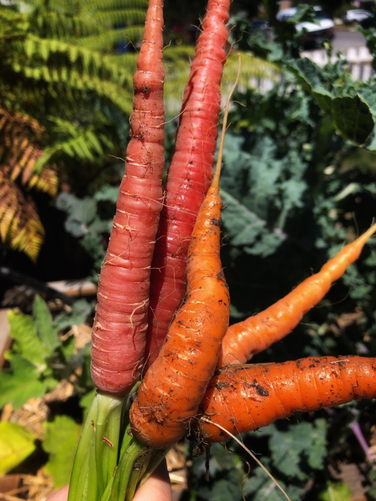 Atomic Reds and Nantes Carrots